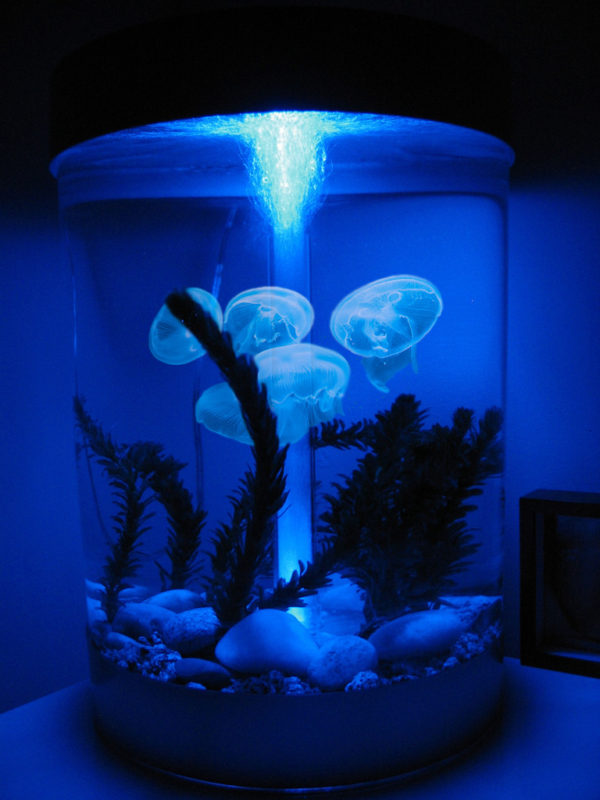 personal jellyfish, keep jellyfish pets,desktop jellyfish tank, home jellyfish,jellyfish tank, the greatest gift, this is it, i want it all, gift ideas